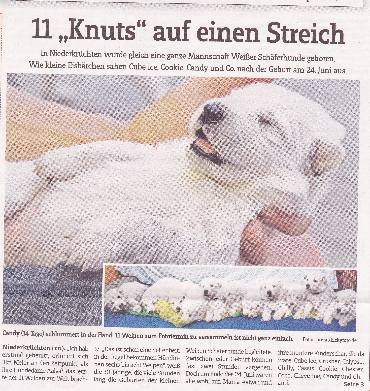 berger blanc suisse züchter deutschland