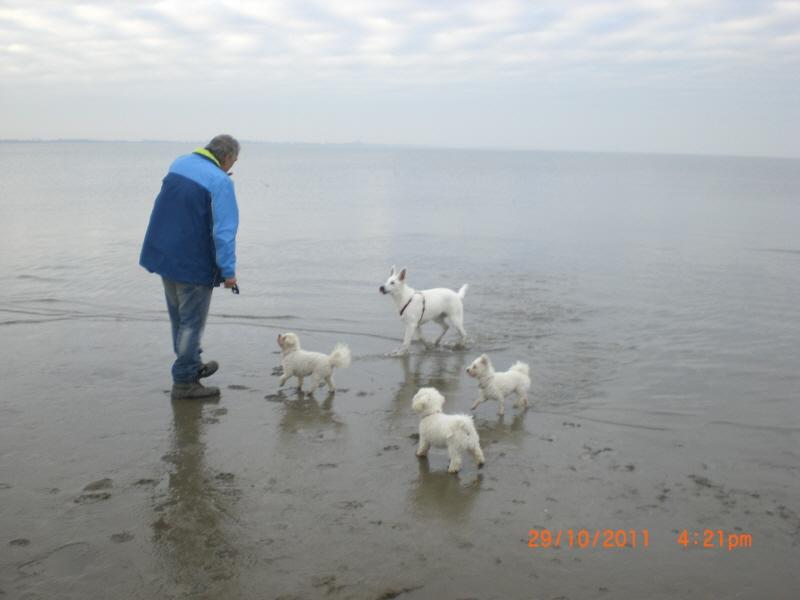 hund trinkt salzwasser