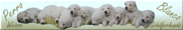 Perro Blanco`s Weisse Schäferhund Zucht